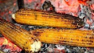corn_081718.jpg