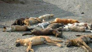 dogs_110518.jpg
